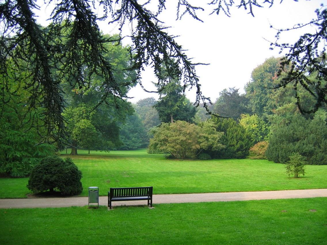 Парковый газон 1
