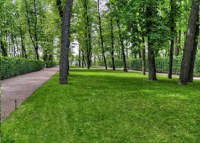 Парковый газон 2